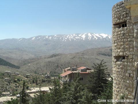 2011年5月 レバノン杉 « MEIS2